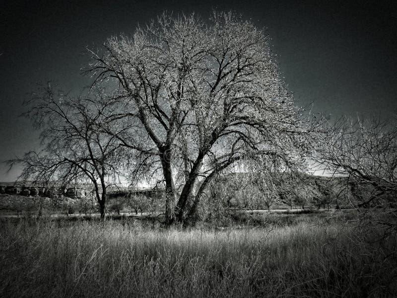 Support d'hiver des arbres au parc d'état de pueblo de lac photos libres de droits