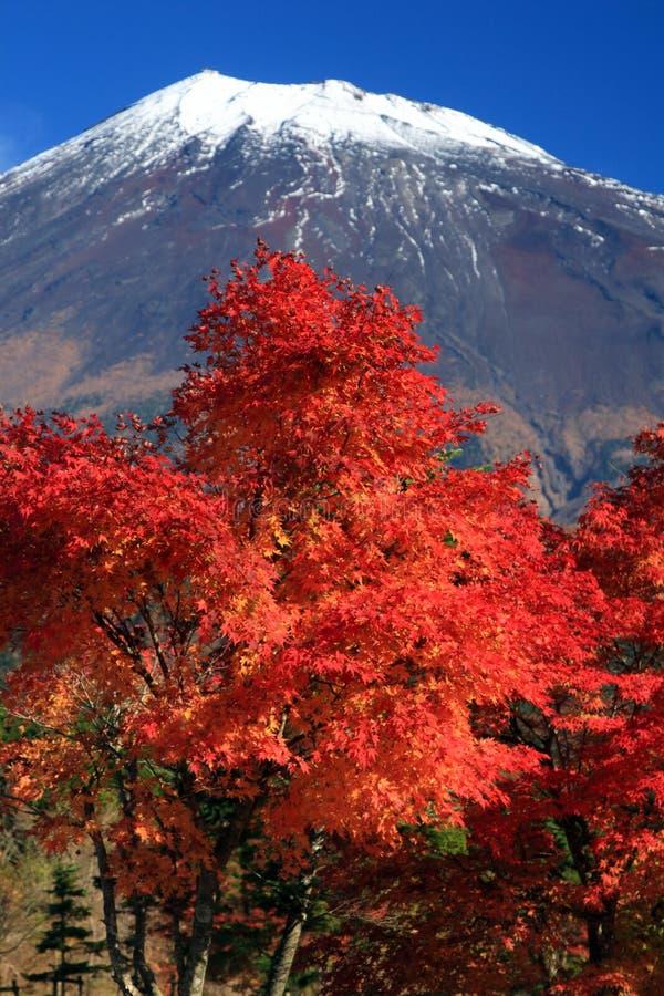 Support Fuji dans l'automne images stock