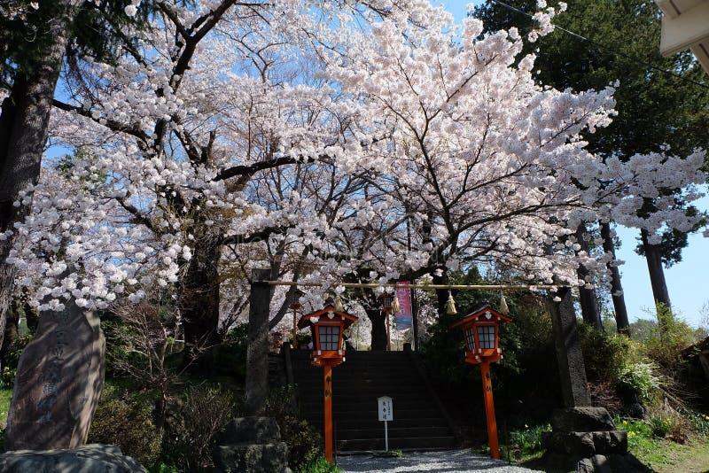 support Fuji, Fuji San photo libre de droits