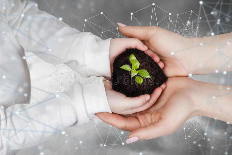 Support the growth and development of a new innovation in the network. A close up of child and adult hands holding an earth lump with green young sprout inside royalty free stock images