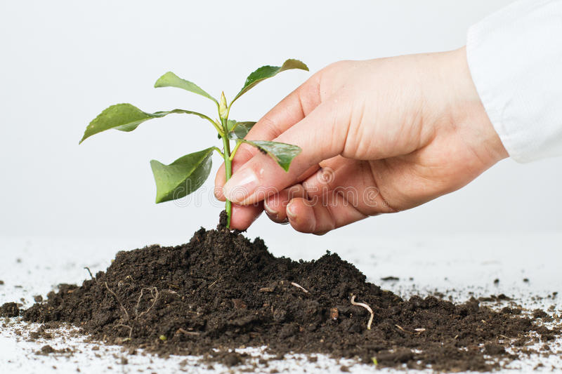 Support new life. Human hands giving support new life royalty free stock photo