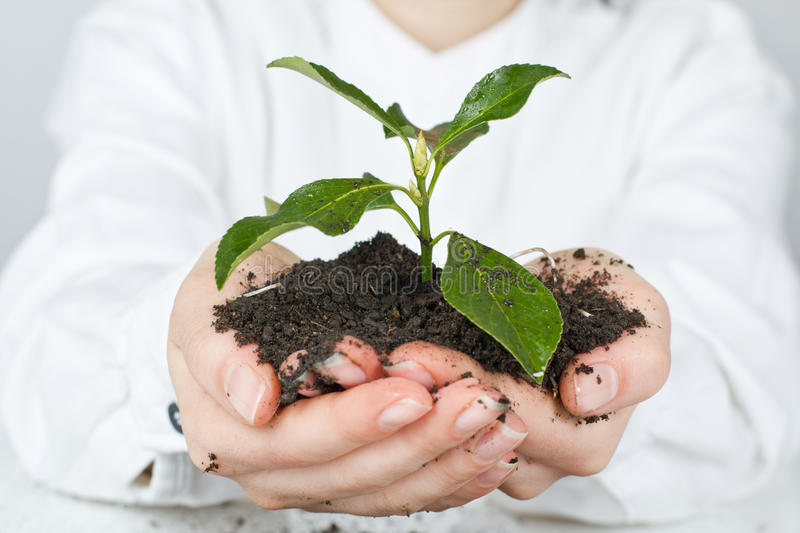 Support new life. Human hands giving support new life stock photography