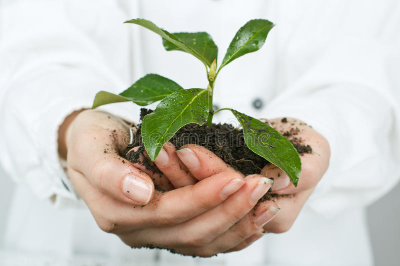 Support new life. Human hands giving support new life stock photo