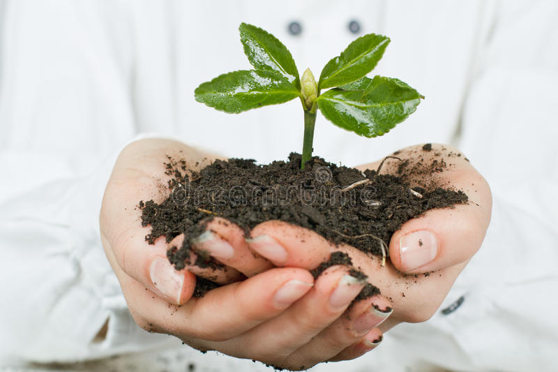 Support new life. Human hands giving support new life royalty free stock images