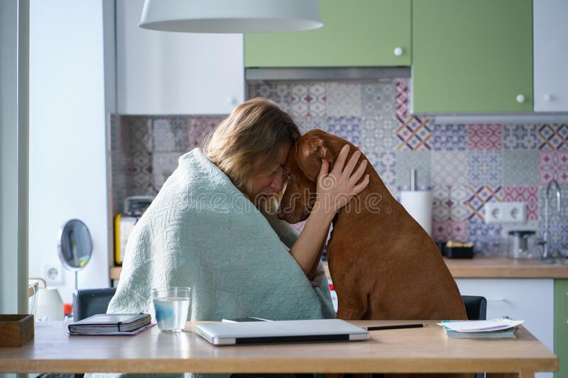 Support from pet friend: crying woman hug comforting dog sit in kitchen tired of search of new job. Support of pet friend: crying woman hugging calm comforting stock images