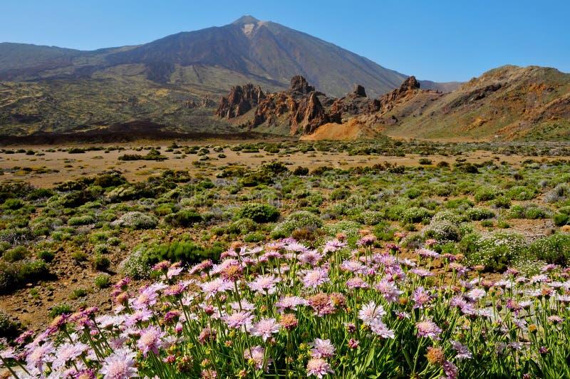 Support Teide, en stationnement national de Teide, Tenerife image libre de droits