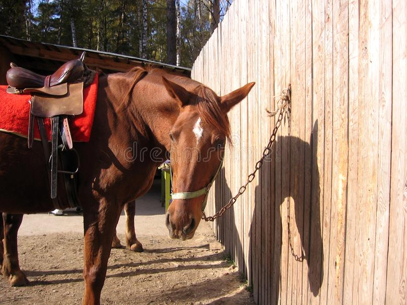 Supporti rossi della briglia della sella del cavallo di sport legati al recinto all'equitazione dell'azienda agricola immagini stock libere da diritti