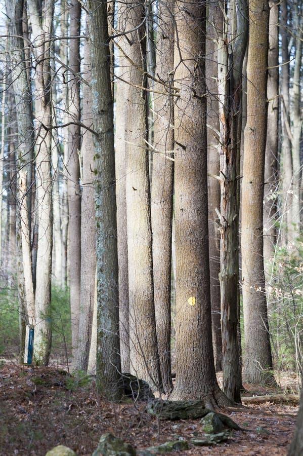 Supporto degli alberi fotografia stock libera da diritti