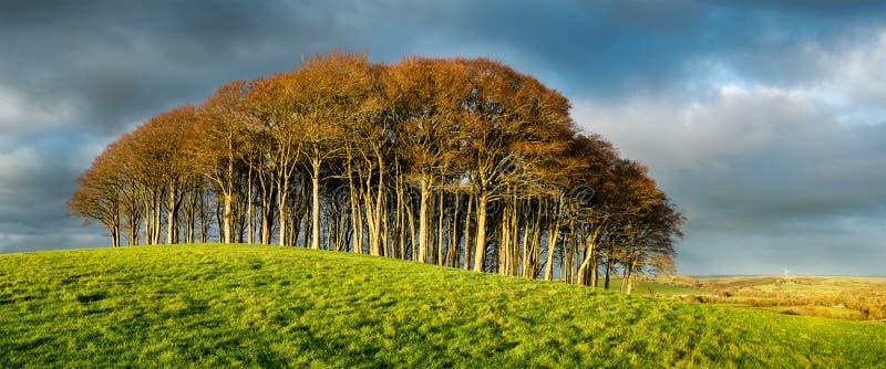 Supporto degli alberi di faggio sotto un cielo drammatico immagini stock