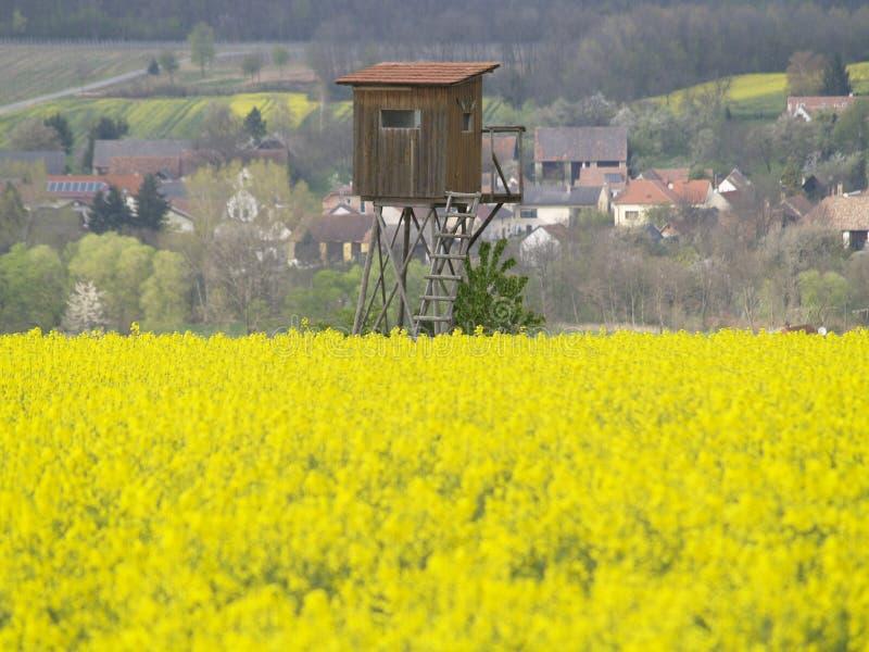 Supporto dei cervi nel campo giallo immagine stock libera da diritti