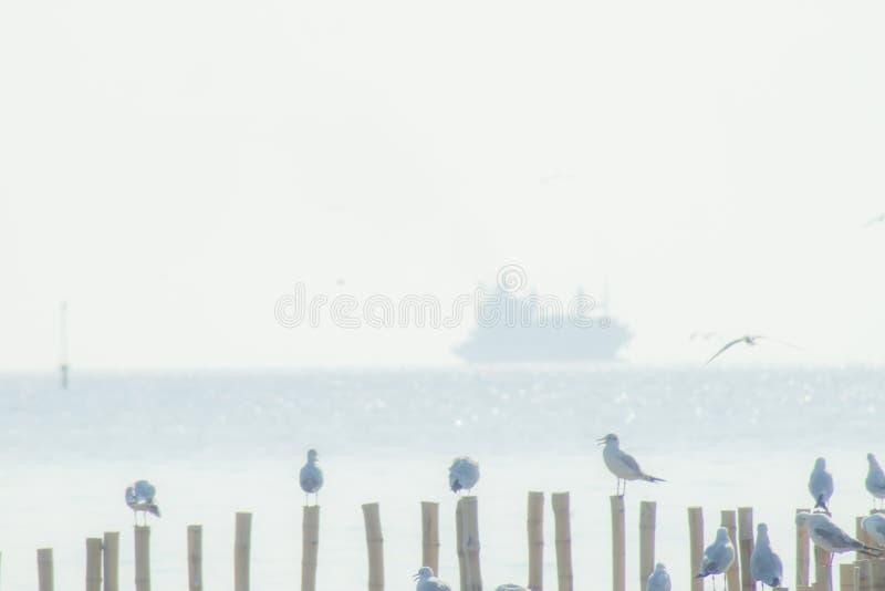Supporto del gabbiano sul palo di legno con natura dell'ampia del cielo del fondo del mare la bella foresta della mangrovia fotografia stock libera da diritti