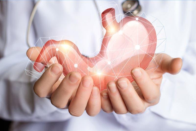 Supporto e cura dello stomaco umano fotografia stock