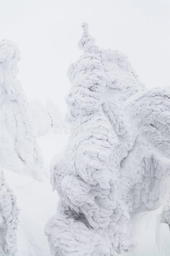 Supporto Hakkoda del mostro della neve nel tre innevato bianco del pino di inverno immagini stock
