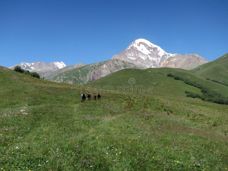 Supporto Kazbek in Georgia fotografia stock libera da diritti