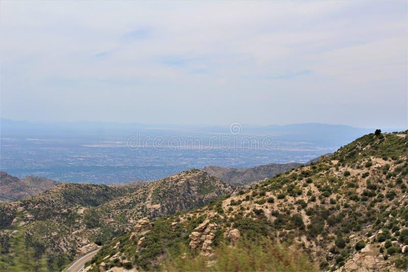 Supporto Lemmon, Santa Catalina Mountains, foresta nazionale di Coronado, Tucson, Arizona, Stati Uniti immagine stock