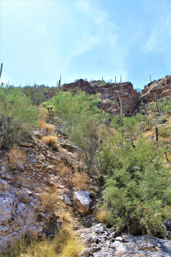 Supporto Lemmon, Santa Catalina Mountains, foresta nazionale di Coronado, Tucson, Arizona, Stati Uniti fotografia stock
