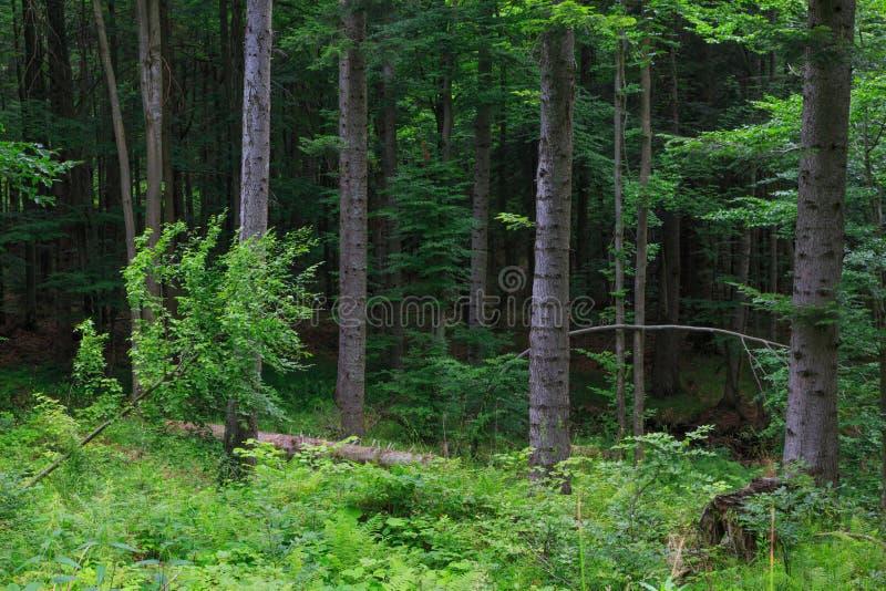 Supporto misto naturale della catena montuosa di Bieszczady fotografie stock libere da diritti