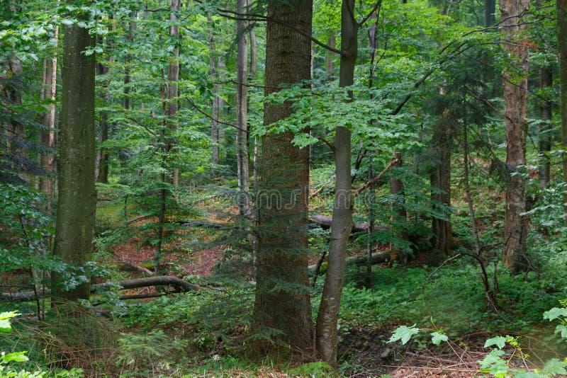 Supporto misto naturale della regione montana di Bieszczady fotografia stock