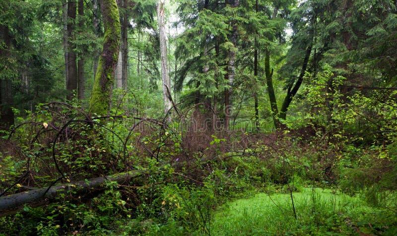 Supporto misto naturale di estate fotografie stock libere da diritti