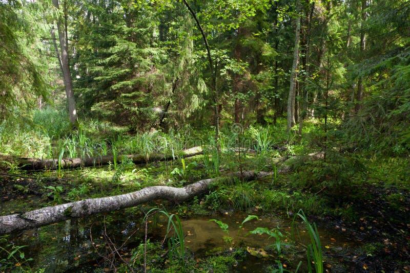Supporto misto naturale di estate fotografia stock