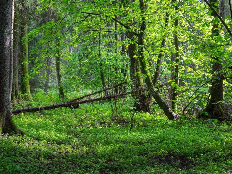 Supporto rivierasco naturale nella luce di tramonto di primavera fotografie stock libere da diritti
