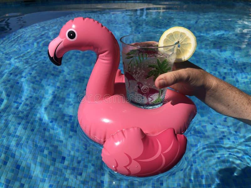 Supporto rosa della bevanda del fenicottero che galleggia in una piscina fotografie stock libere da diritti