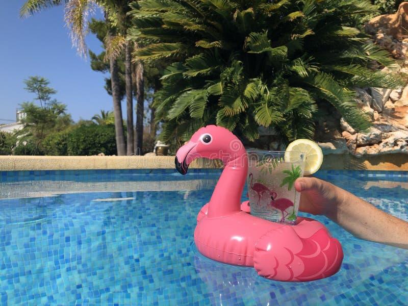 Supporto rosa della bevanda del fenicottero che galleggia in una piscina immagine stock