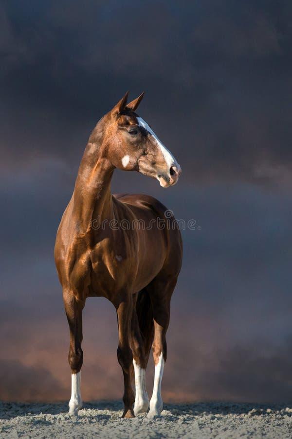 Supporto rosso del cavallo fotografia stock libera da diritti