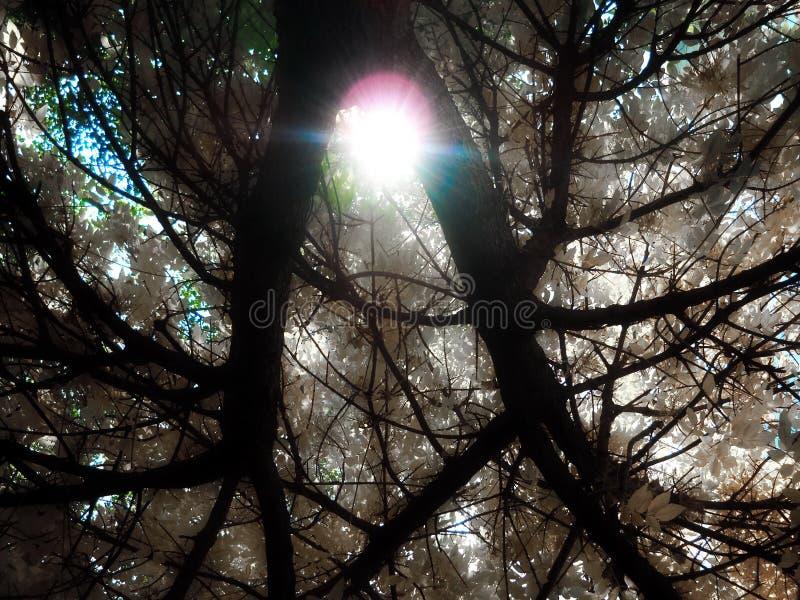 Supports rouges pour le coeur ou la lumière du soleil entre deux branches illustration libre de droits