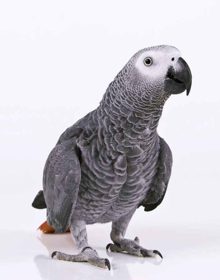 supprised papegoja royaltyfria foton