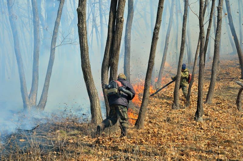 Supresión del incendio forestal 61 fotografía de archivo libre de regalías
