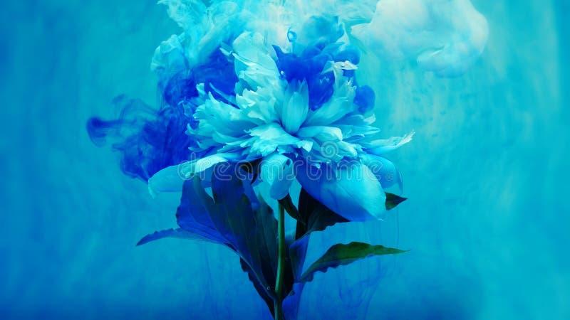 Sur de belles fleurs versant la peinture Plan rapproché illustration libre de droits
