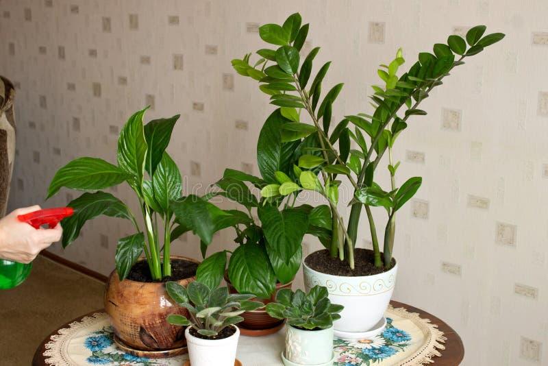 Sur la table sont fleurs d'intérieur de pots les diverses photo libre de droits
