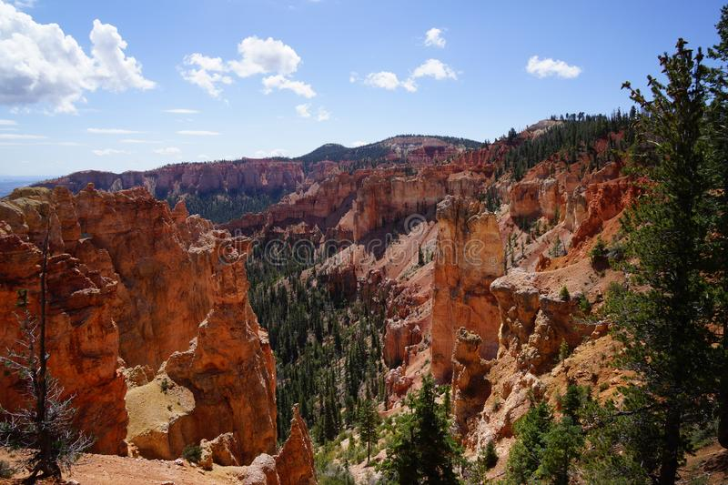 Sur le canyon de bryce photo libre de droits