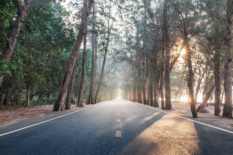 Sur le chemin avec la route droite en bois de pin de matin de lever de soleil photographie stock libre de droits