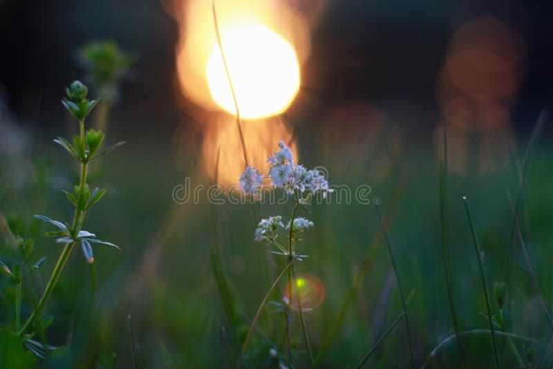 Sur le coucher du soleil photographie stock