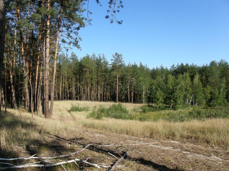 Sur le fringle de la forêt photos stock