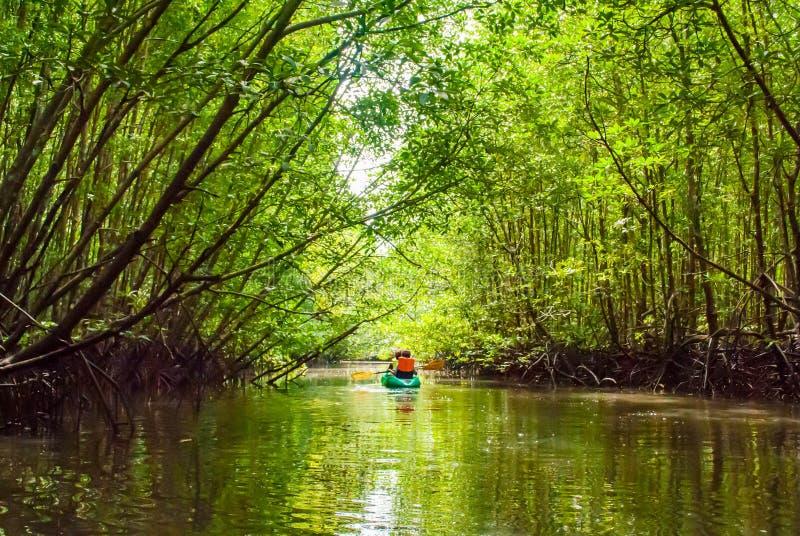 Sur le kayak de voyage de jour dans la forêt verte de palétuvier photo stock