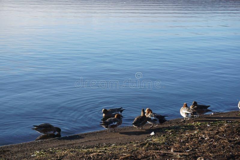 Sur le lac pendant le matin avec Teal au Japon photo libre de droits