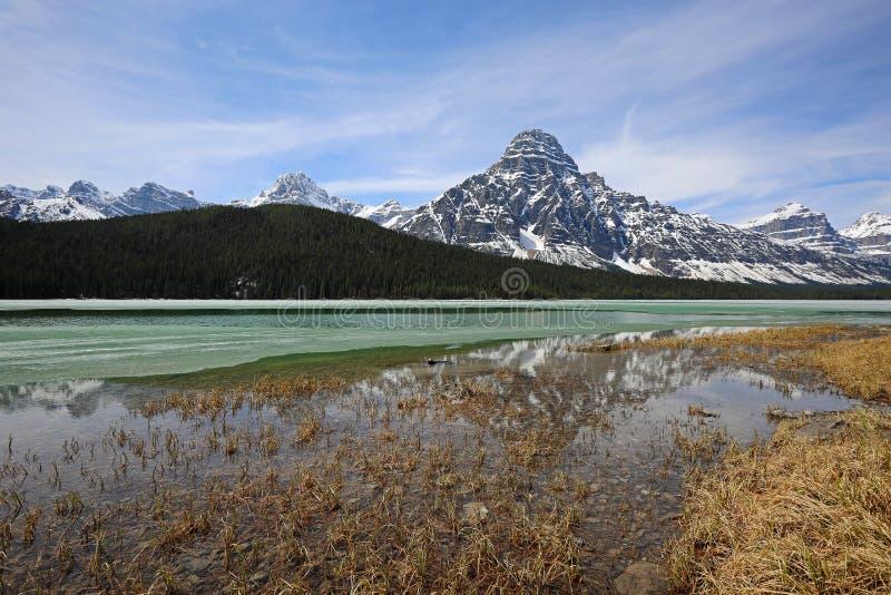 Sur le lac waterfowl photographie stock libre de droits