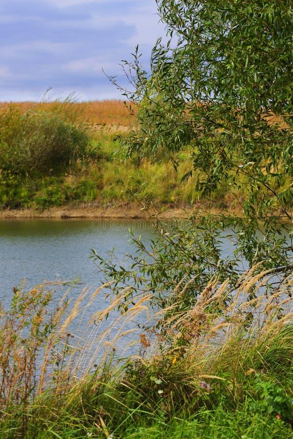 Sur le rivage du lac de forêt image libre de droits