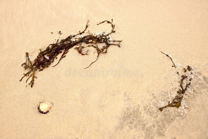 Sur le sable photo stock