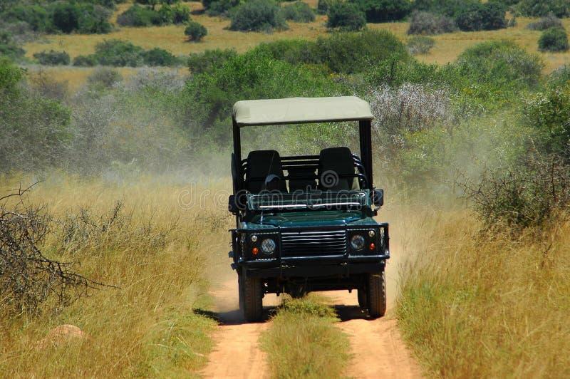 Sur le safari en Afrique photo libre de droits