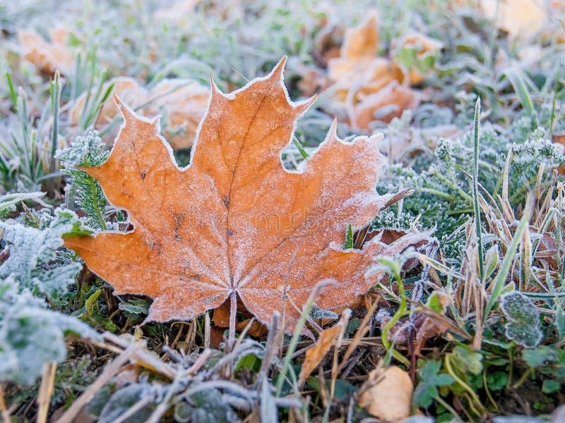 Sur les mensonges de la terre une feuille d'érable jaune givrée, un automne froid DA photographie stock libre de droits