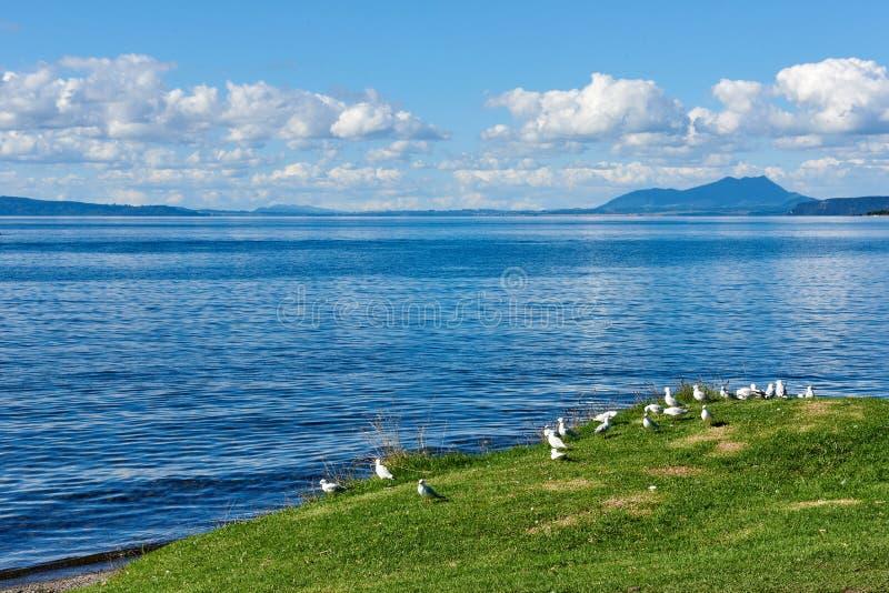 Sur les rivages du lac Taupo au Nouvelle-Zélande image stock