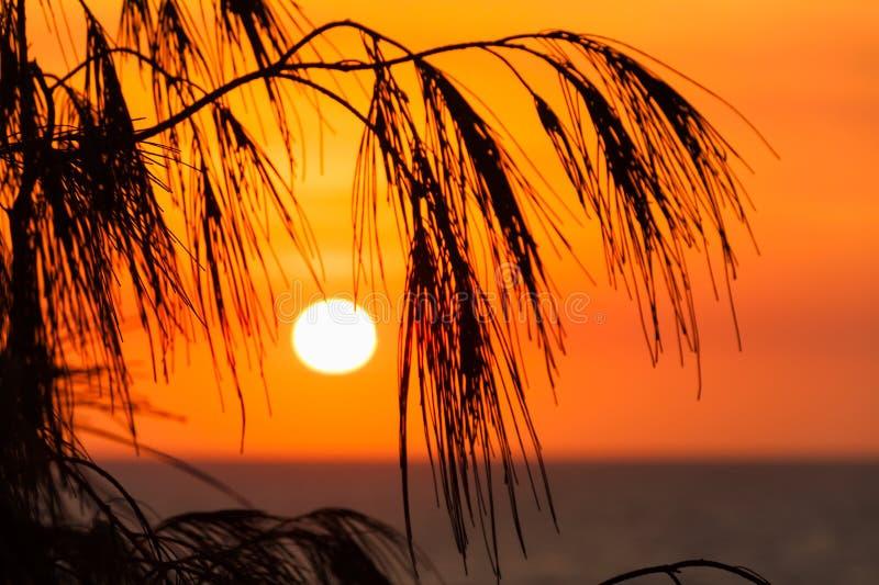 Sur que sube sobre la playa principal (Queensland, Australia) foto de archivo libre de regalías