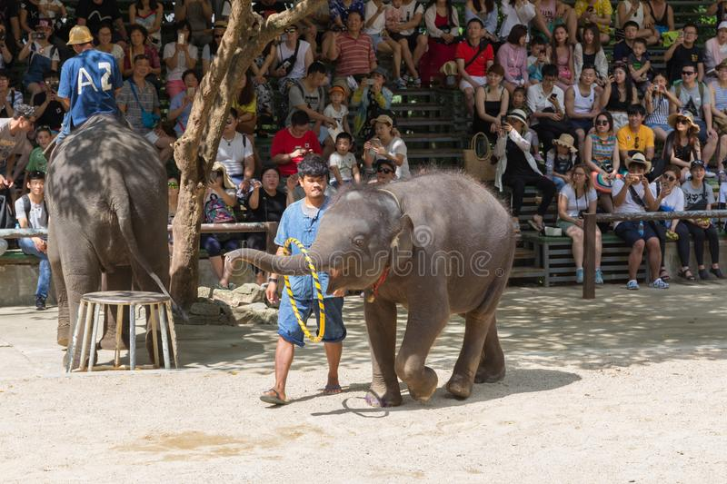 SURAT THANI PROVINCE, THAILAND, FEBRUARY 12: The elephant show a stock images