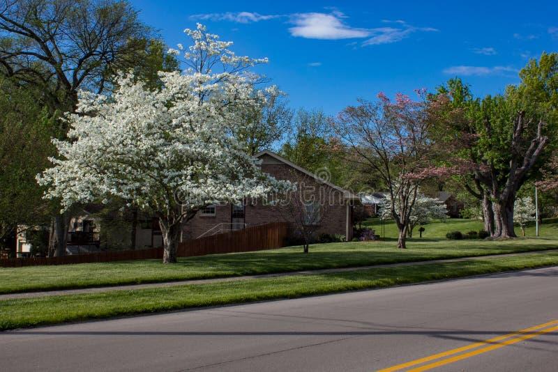 Surburban hus i tyst grannskap fotografering för bildbyråer