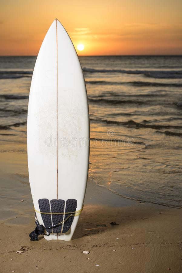 Surf board on the beach by sunset royalty free stock photo