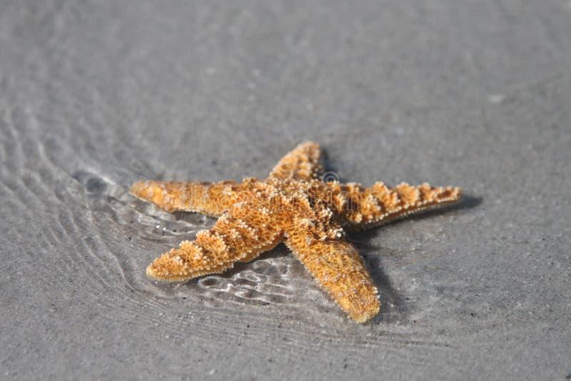 surf rozgwiazdy obrazy royalty free